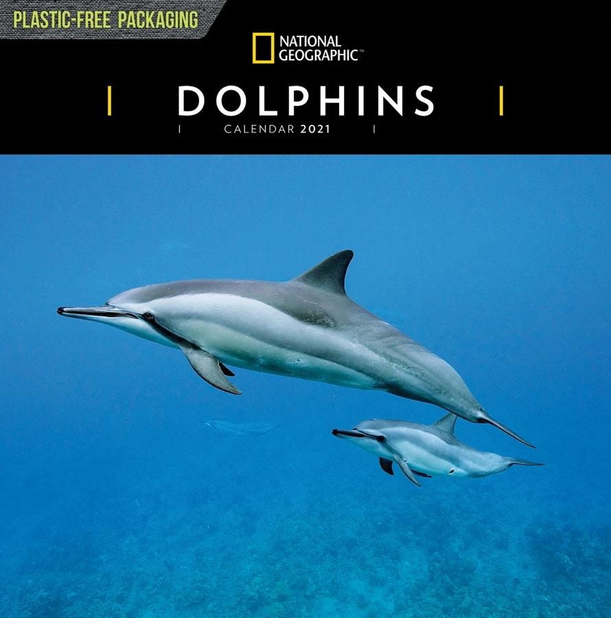 Catch Dolphin Calendar Free