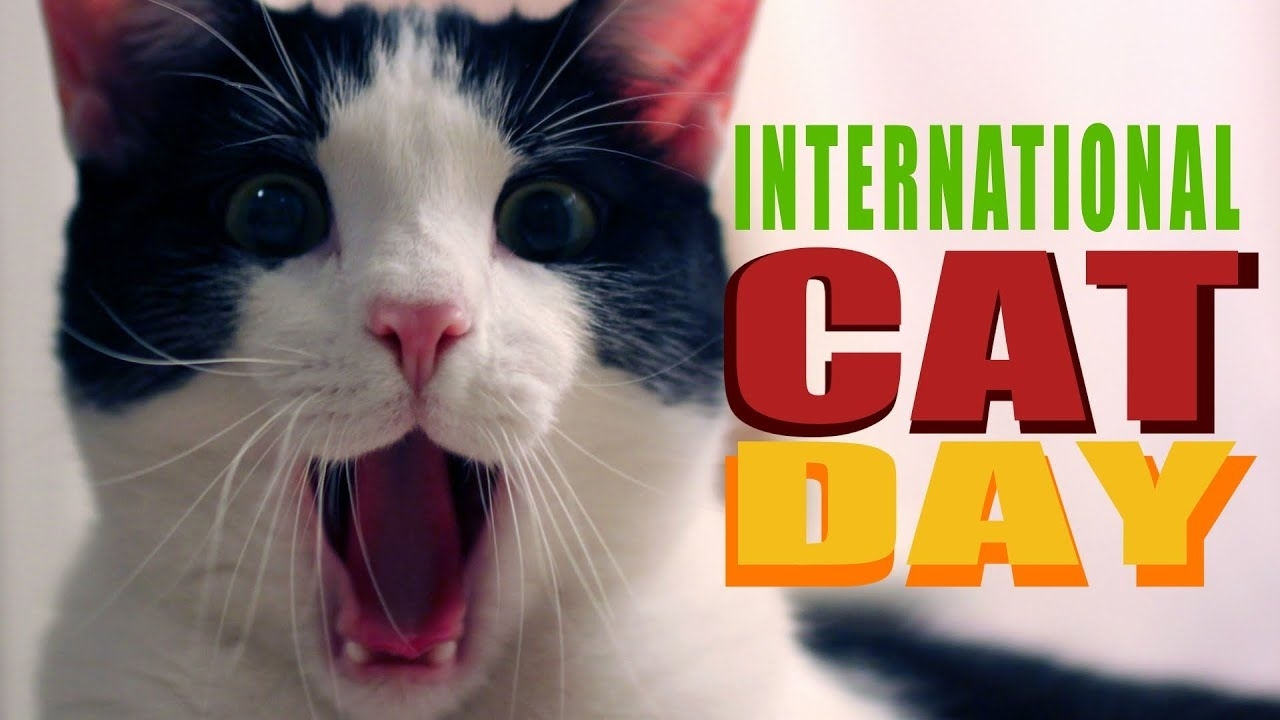 Collect August 8 Cat Day
