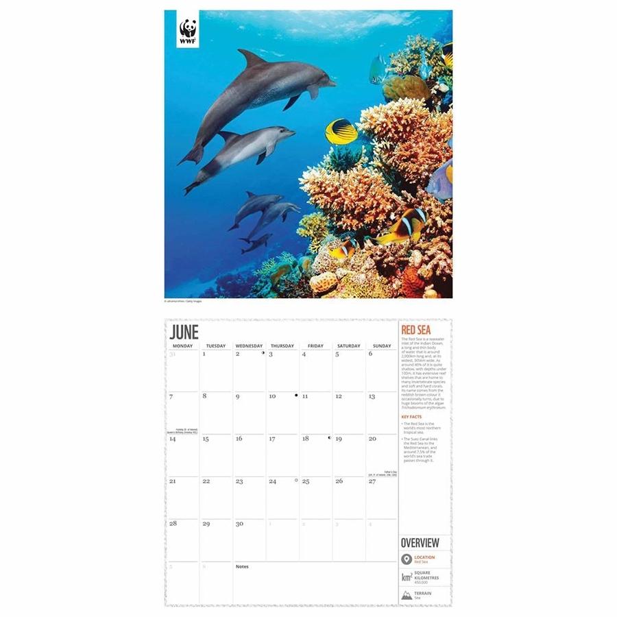 Take Dolphin Calendar Free